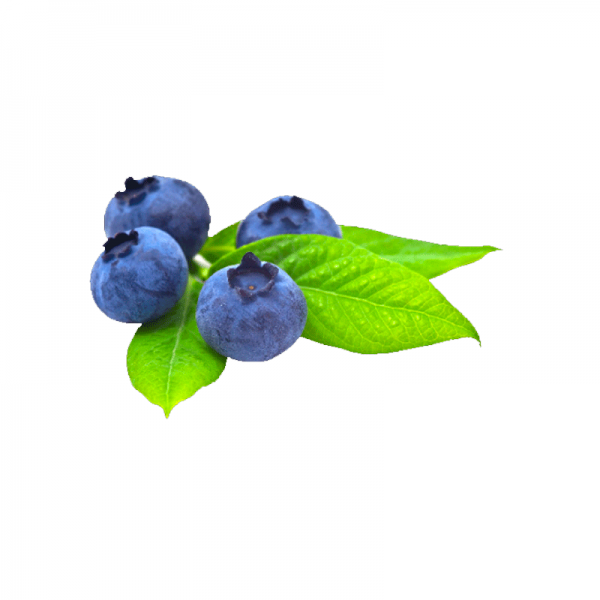 Blueberry Flavor (Extra)  TPA